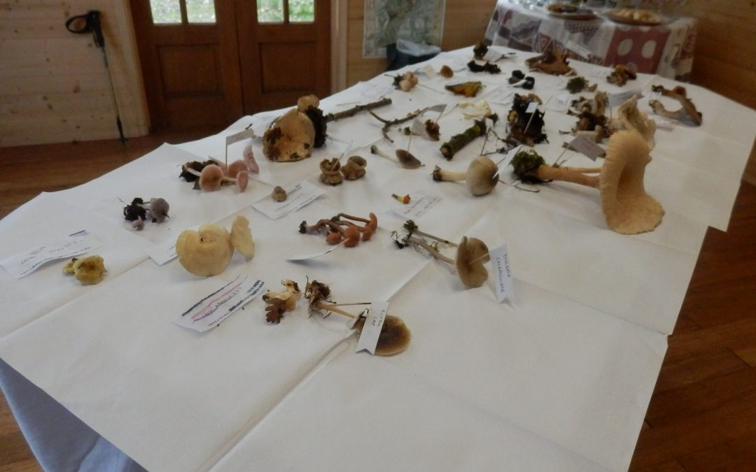 Friary Fungi Day, Hinton Charterhouse, 31 October 2019