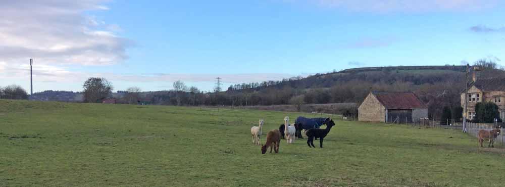 Batheaston/ Bathampton New Year Walk: 3 January 2021