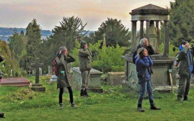 Early Bird Song,  Bath Abbey Cemetery (off Ralph Allen Drive),  27 April 2021